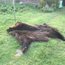 Шкура медведя, в Новосибирске