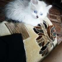 Отдам котёнка, в добрые руки, полтора месяца, в Чите