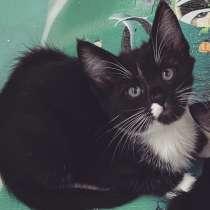Котёнок, в Твери