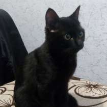 Отдам котенка, в Боровичах