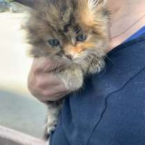 Срочно ищем хозяина котёнку !!!, в Кемерове
