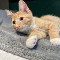 Рыженький котенок Кузя ищет дом - Москва, в Москве