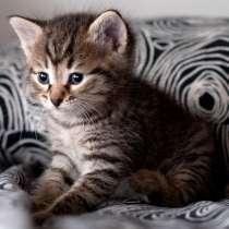 Продам котенка, в Томске