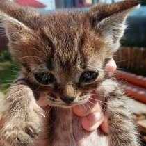Котята в добрые руки, в Балашихе