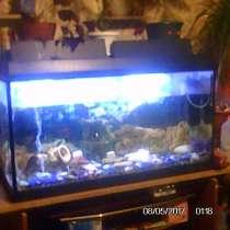 Продам аквариум 200 литров с подставкой, в Москве