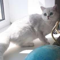 Британские котята, в г.Караганда