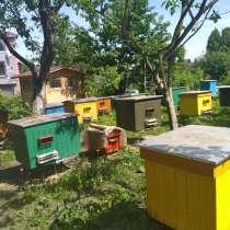 Мед натуральный, в г.Барановичи
