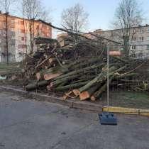 10 кубов леса, мягкие породы, в г.Клайпеда
