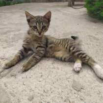 Отдам котят в хорошие руки, в г.Мозырь