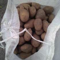 Картофель крупный. Урожай 2017, в г.Дрогичин
