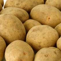 Продам картофель Не дорого, в г.Новополоцк