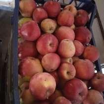 Продам яблока очень сладкие без гмо, в г.Днепропетровск