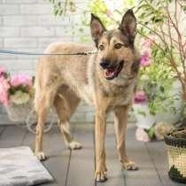 Салли - очень ласковая душевная собака в дар, в Москве