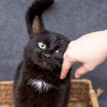 Савелий - ласковый и харизматичный кот из приюта в добрые ру, в Москве