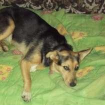 Маленькая собачка Юби, в Ульяновске