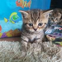 Милашки-котятки, в г.Гомель