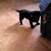 Отдам в добрые руки щенка 2 месяца, в Комсомольске-на-Амуре