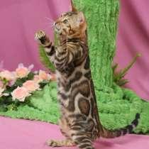 Бенгальские котята питомник БЕН ГЛА МУР. элитные. лучшие, в г.Бишкек