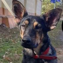 Джетта - милый и умный щенок, приучен к квартире и дому, в Москве