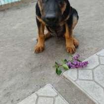 Отдам собачку в ооочень добрые руки!!!, в г.Бишкек