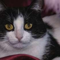 Черно-белый Маркиз – красавец кот в добрые руки, в Москве