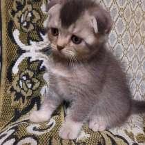 Котята, в г.Гомель