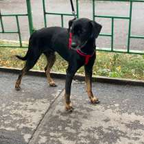 Пес ищет дом, в Екатеринбурге