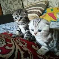 Мраморные котята, в г.Полтава