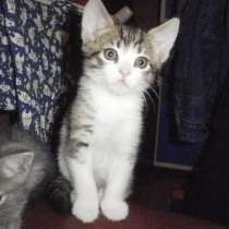 Котик 2 месяца в добрый руки, в Зеленограде