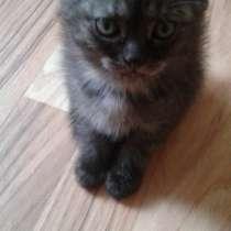 Котенок - девочка, в Сергиевом Посаде