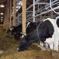 Крупное фермерское животноводческое зерноводческое хозяйства, в Волгограде
