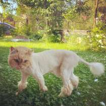 Стрижка кошек, в Ногинске