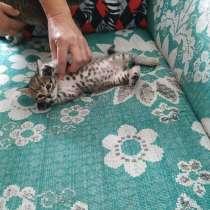 Кошечку в хорошие руки, в г.Могилёв