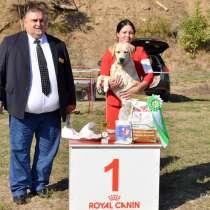 Предлагаю услуги дрессировки собак и подготовки к выставкам, в Таганроге
