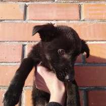 Щенки-собаки, в самые добрые руки!, в г.Костанай