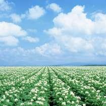 Оздоровленный, качественный элитный семенной картофель, в Казани