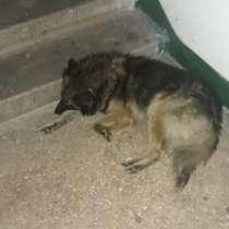 Найдена собака, кобель, около магазина АТБ на 5-ом Заречном, в г.Кривой Рог