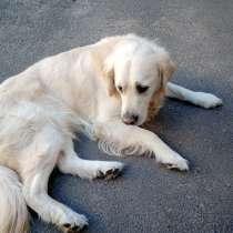 Собака, в Курске