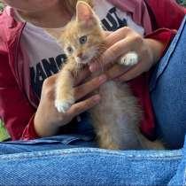 Котенок, мальчик 1.5-2 мес, очень игривый, ласковый, в Москве