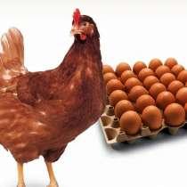 Яйцо инкубационное, в Новомосковске