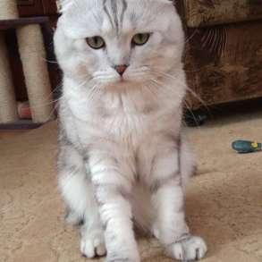 Кот на вязку, в Симферополе
