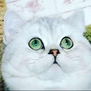 Кот на вязку, в Москве