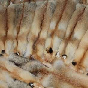Продам шкуры лисы рыжей, в Новосибирске