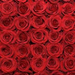 Розы из Эквадора по самым низким ценам в России, в Москве