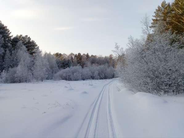 Участок с лесом в Красноярске фото 4