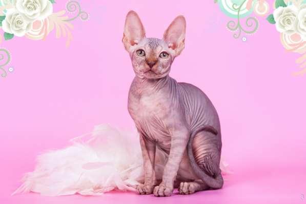 Бархатный котёнок с чувственной душой. в фото 7