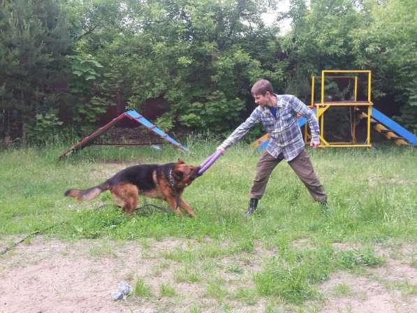 Передержка и дрессировка собак в Раменское фото 7