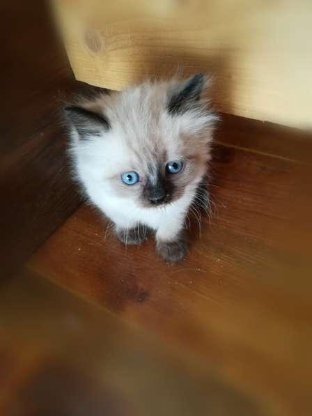 Подарю котят в фото 4