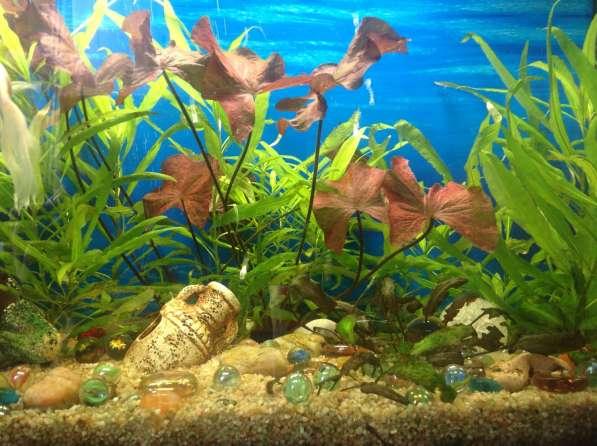 Светодиодные Светильники для аквариумов
