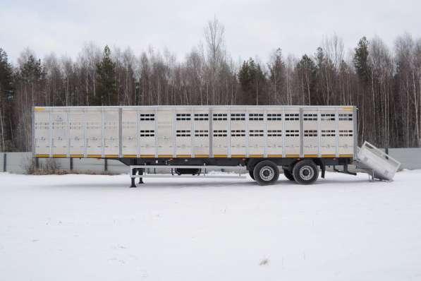 Скотовоз Тонар 98262 в Москве фото 4